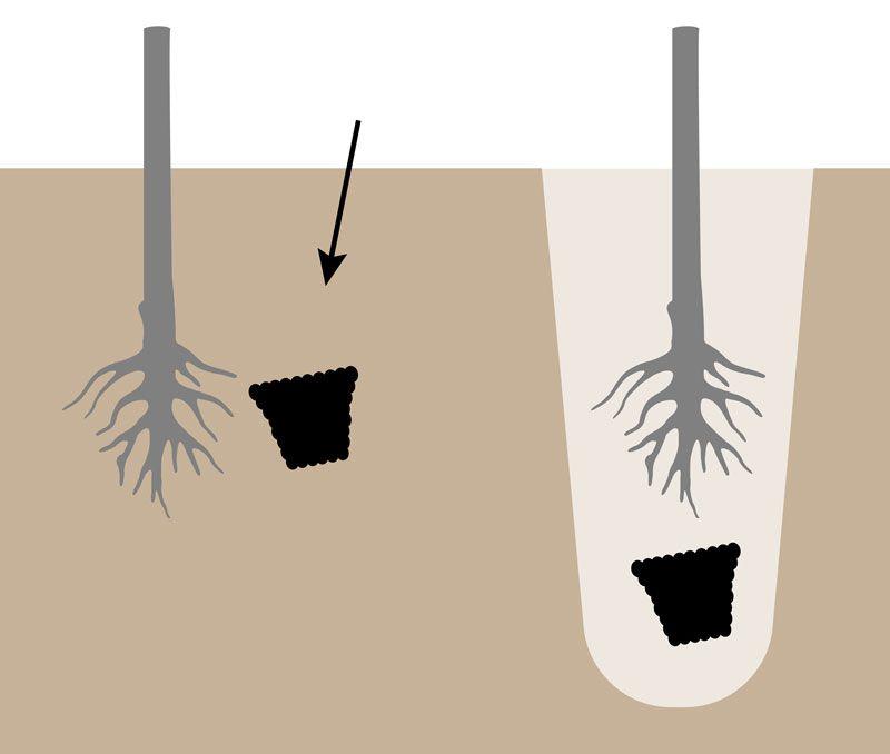Fertilizare direct în groapa de plantare!, főkép