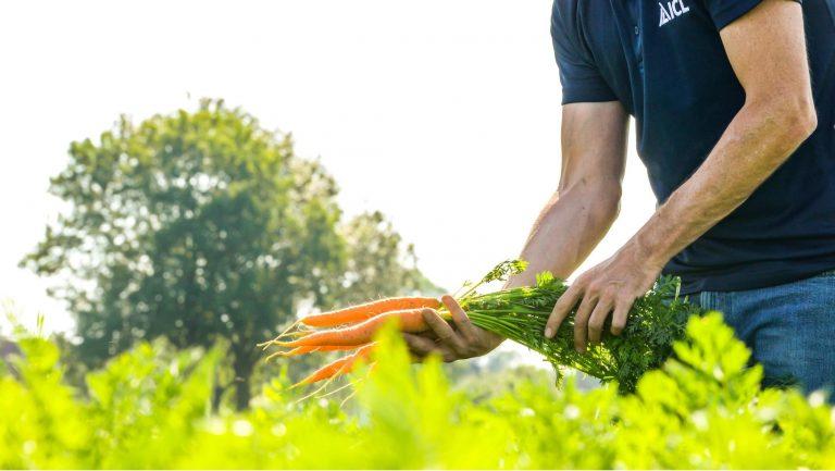 Recomandări pentru cultura de morcov, főkép