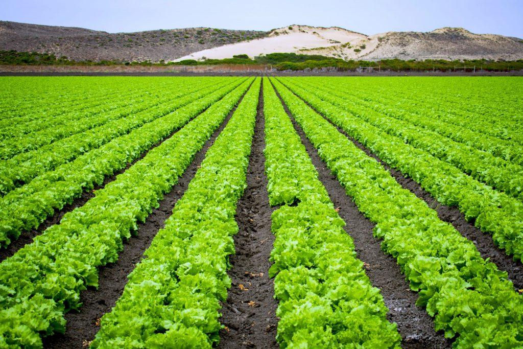 Salată, főkép